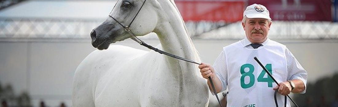 Al Khalediah European Arabian Horse Festival 2015. Four Mercedes-Benz cars remain in Poland, two return to Germany (August 21st-23rd)