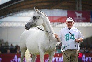 Najlepszy koń pokazu Palanga, z Mariuszem Liśkiewiczem, fot. Ewa Imielska-Hebda