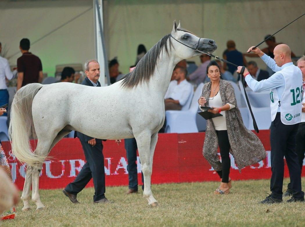 Alfabia Aragon Ex Magnokbey